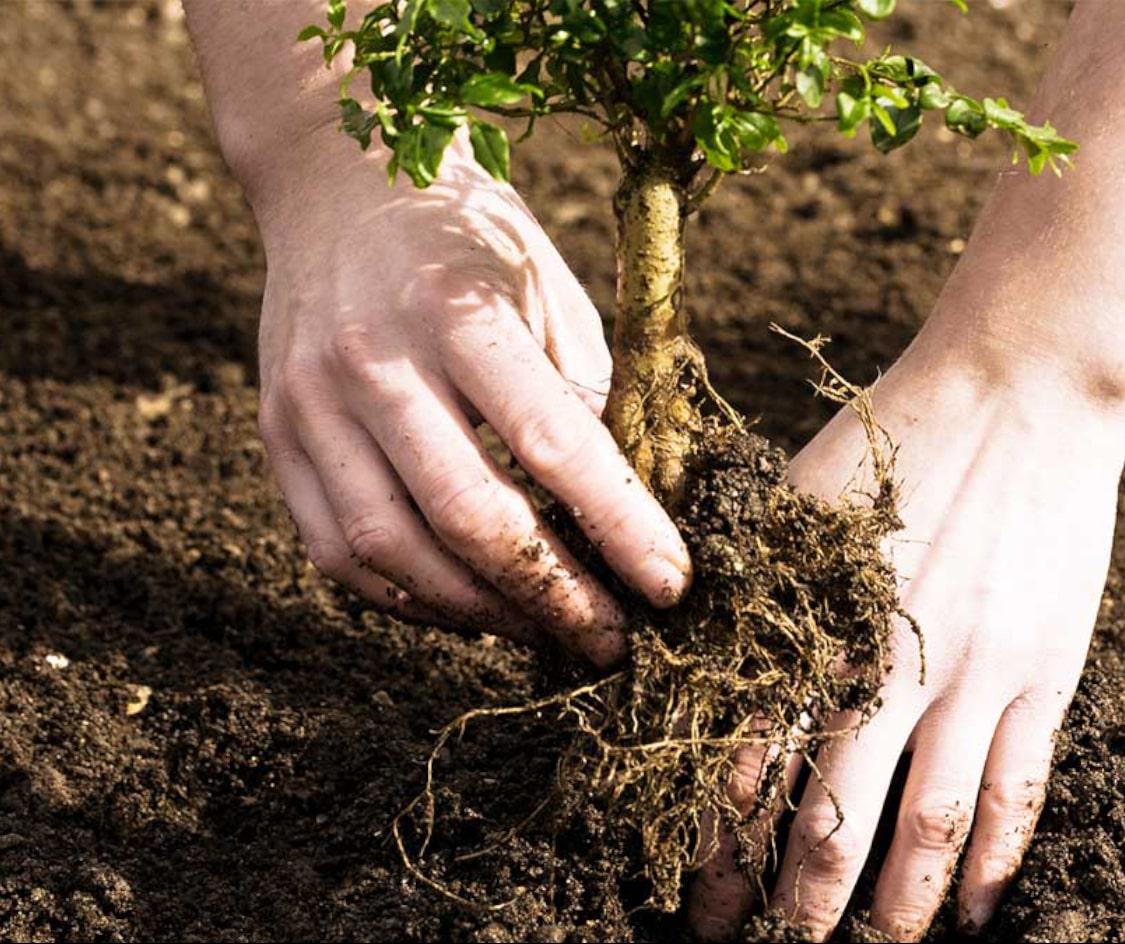 Sázení malého stromu